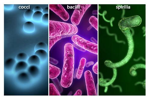 عوامل بیولوژیکی